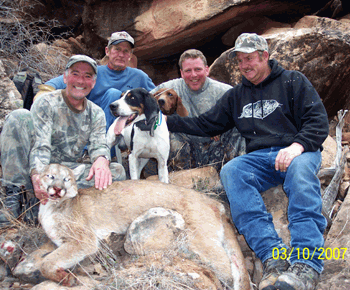 guided elk hunts, trophy mule deer, cougar, black bear, turkey, and bighorn sheep hunts in utah