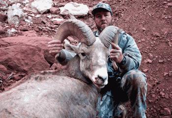 Bighorn sheep hunting in Utah